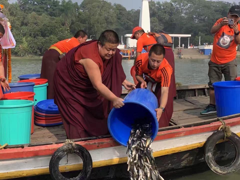 release-fish-kathok